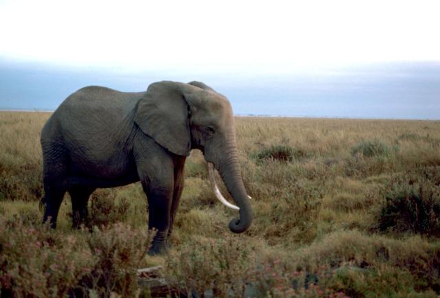 Image: Elephants