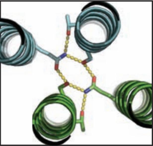 Image: Protein molecule