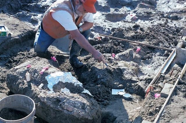 Mastodon unearthed