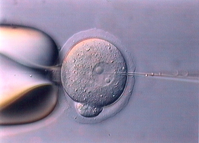 Embryo and pipette