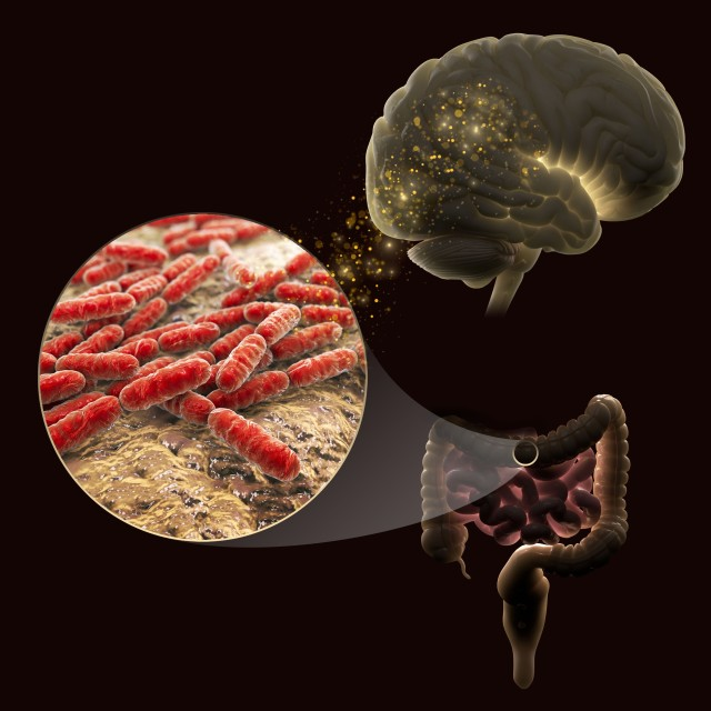 Bacteria and brain