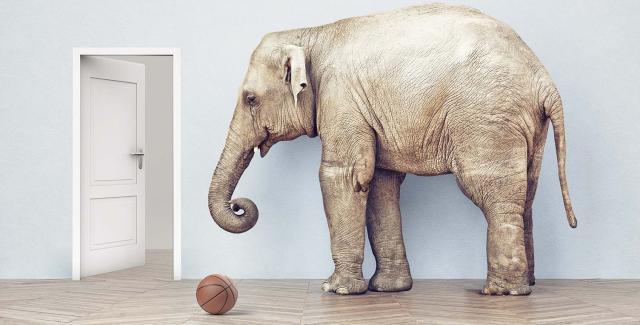 Elephant and basketball
