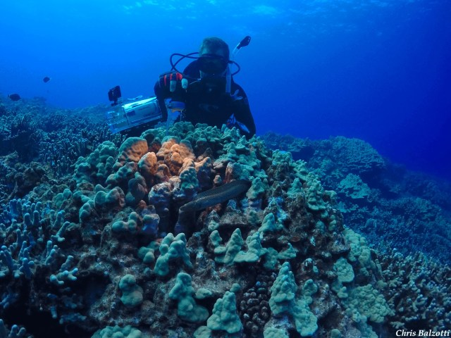 Checking coral reefs