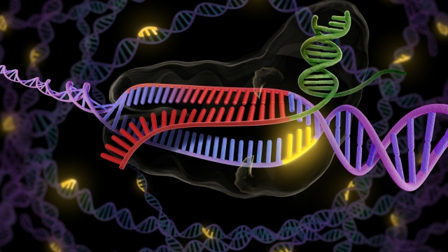 CRISPR mechanism