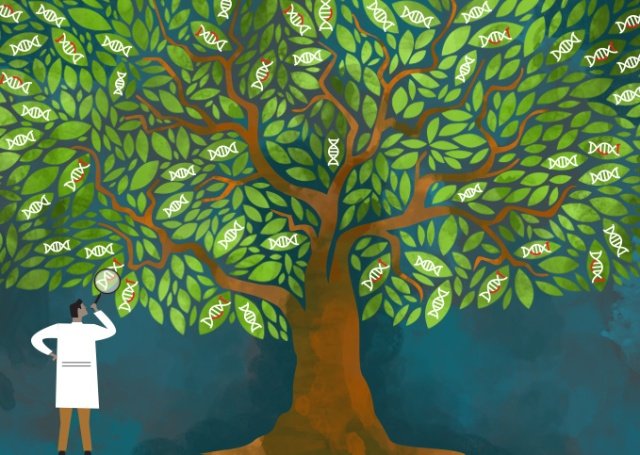 Evolutionary DNA tree