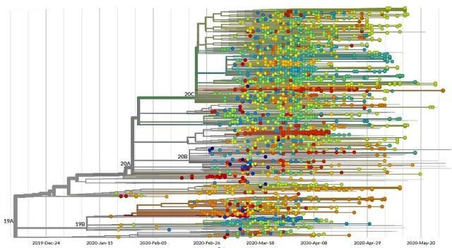 Coronavirus evolutionary tree